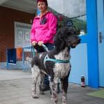 Hunde-Plauschtriathlon