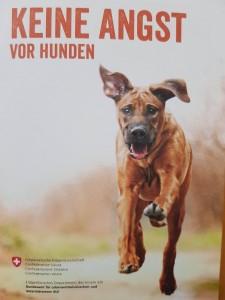 BLV Broschüre