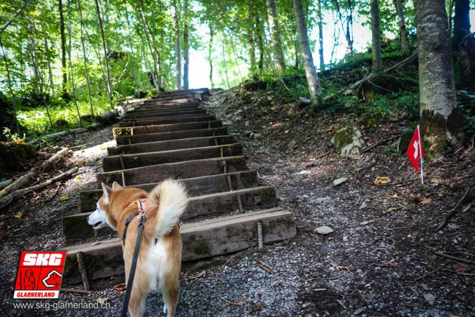 Oh! Wieder ein Fähnli! Treppensteigen angesagt!