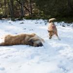 Hundeplausch