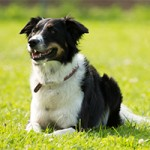 SKG Glarnerland