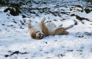SKG Glarnerland-9589 (1)